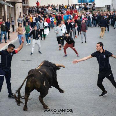 toro-del-cajon-mario-santos